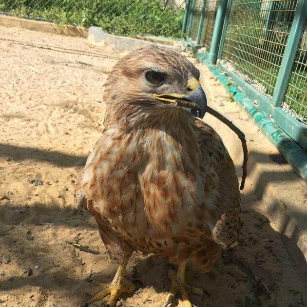 golden-eagle-park-amman-jordan